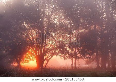 Oak Trees In Meadow At Sunrise, Sunbeams Breaking Through Morning Fog