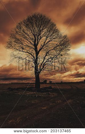 Sinister Landscape: Silhouette Of A Big Tree On A Cloudy Day