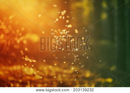 Magic autumn background with dancing fairies (midges) in colorful forest