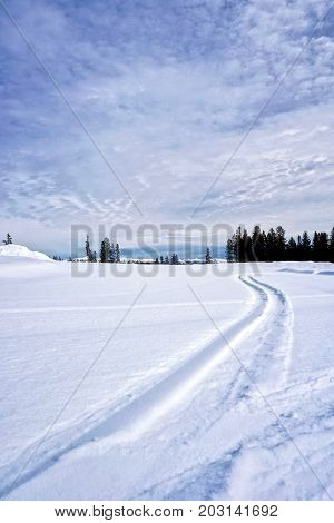 Vertical shot of snowy field with single set of ski tracks