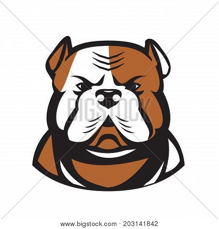 Retro style illustration of an American Bulldog heada breed of utility dog viewed from front on isolated background.