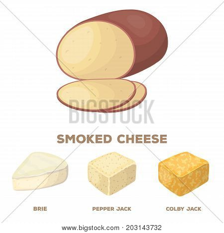 Brynza, smoked, colby jack, pepper jack.Different types of cheese set collection icons in cartoon style vector symbol stock illustration .