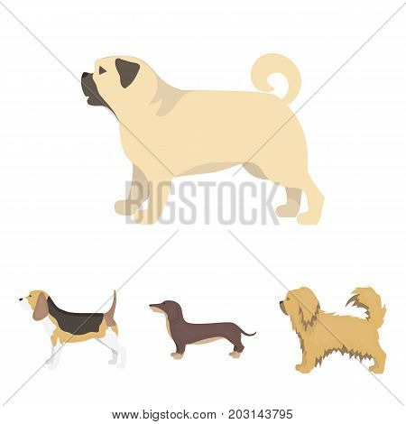 Pikinise, dachshund, pug, peggy. Dog breeds set collection icons in cartoon style vector symbol stock illustration .