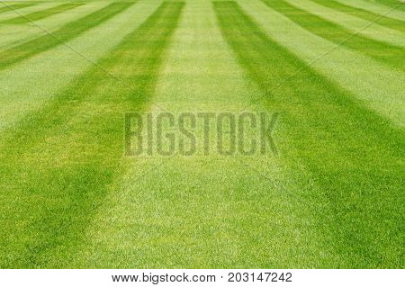 Striped green grass lawn summer background. Focus on the foreground.