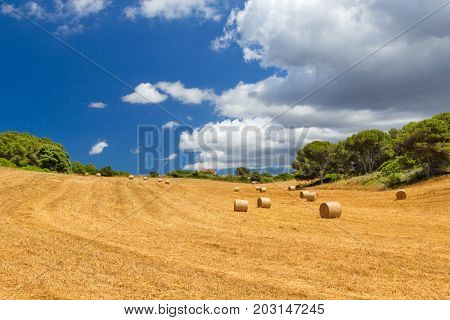 Sunny field with hay bales and blue cloudy sky, Menorca island, Spain. Harvesting autumn background.