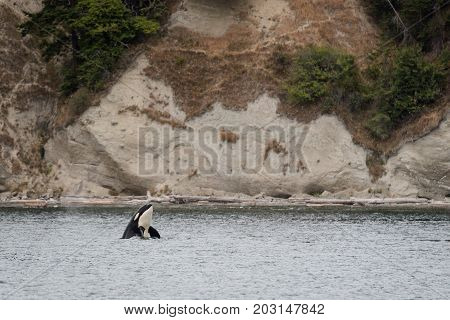 A whale watching excursion in the pacific northwest relatively close to Seattle, Washington.