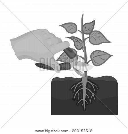 Plants, single icon in monochrome style .Plants, vector symbol stock illustration .