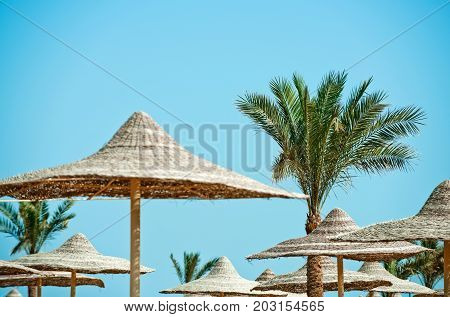 Summer vacation and traveling. Beach straw umbrella with palm tree. Relax and holiday. Sunny blue sky at resort. Umbrella and beach.