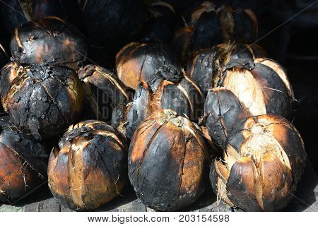 roasted coconut Coconut burn, cane, sugar, sugarcane, juice, fresh, white, plant, background, food, drink, sweet, industry, isolated, agriculture, raw, stem, cut, green, nature, wooden, texture, closeup, healthy, natural, leaf, brown, grass, tropical, fib
