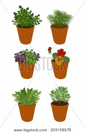 Isolated different herbs in a pots: bay leaves, arugula, basil, parsley, dill and nasturtium. Herbs on a white background, vector illustration.
