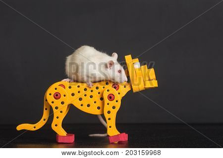 white domestic rat riding on toy leopard