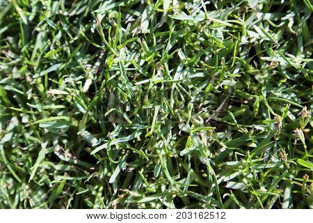 Lawn With Green Grass