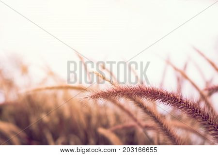 Nature grassland at outdoors with vintage tone.