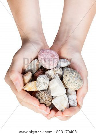 Top View Of Various Natural Pebbles In Handful