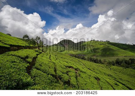 Tea Plantations, Scenic View With Beautiful Clouds, Bandung, West Java, Indonesia