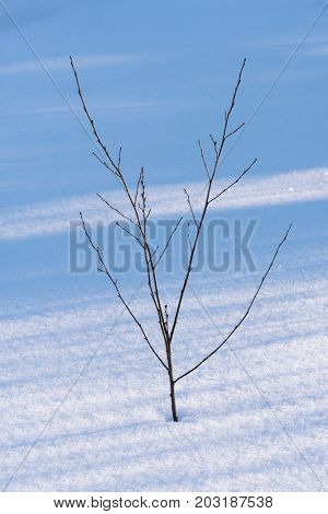 Winter in the garden. Young tree in a snowdrift