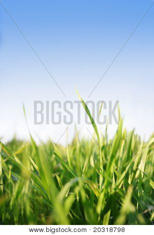 green grass against blue sky (shallow focus)