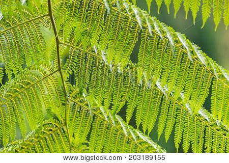 Beautiful Green leaf, Nature wall and background