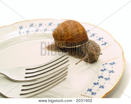 Snail And Plate
