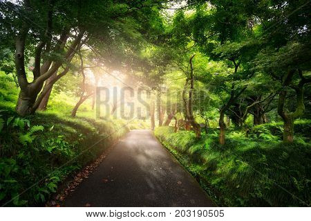 beautiful peaceful Landscape; path in the old green park