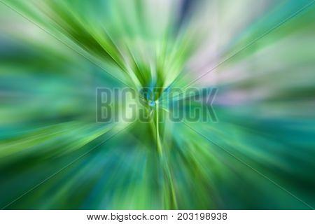 Wild Vegetation Shot With Motion Blur Effect.