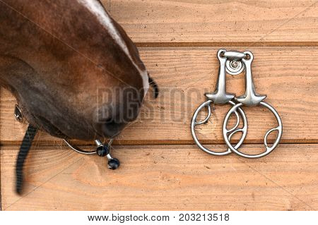 Curious horse nose touching metal spurs hanging on wooden wall. Horizontal image.