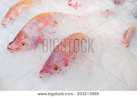 Close-up Fresh Red Tilapia Fish In Ice Bucket