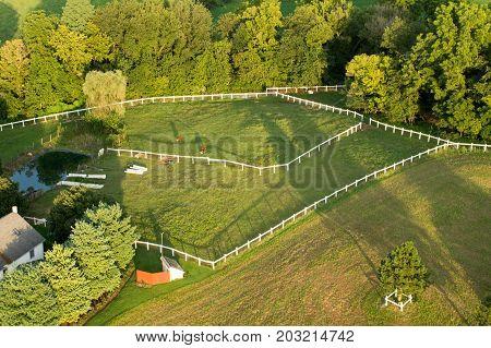 Steers In Pasture Aerial