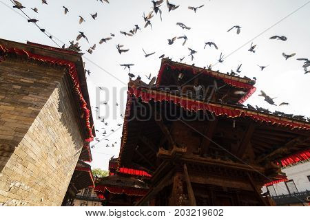KATHMANDU NEPAL - 9/26/2015: Pigeons fly from the rooftops at Durbar Square in Kathmandu Nepal.