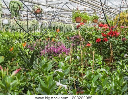 scenery in a vegetal greenhouse with dense flower vegetation