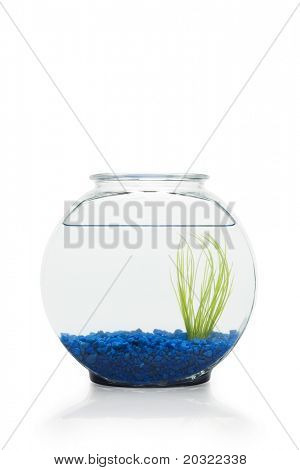 Fish bowl filled with water, blue stones and plant only against white background.