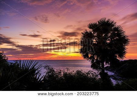 Dramatic Sunset with silhouette palm tree in Phuket