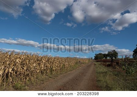 Rural scene nature sky farm corn agriculture field