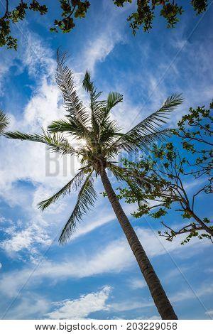 Tropical coconut tree under blue deep sky