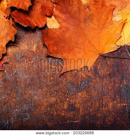 Fall wooden background with Red and Orange Autumn Leaves. Yellow Fallen autumn leaves on vintage wooden old backdrop