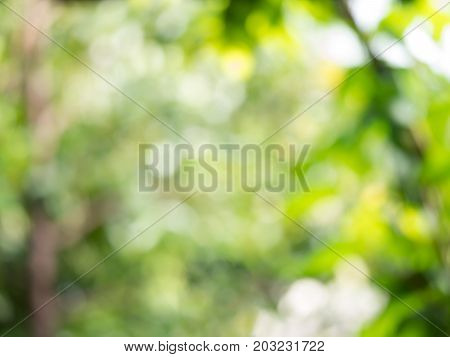 Abstract bokeh bright green blur background from green leaves tree nature.