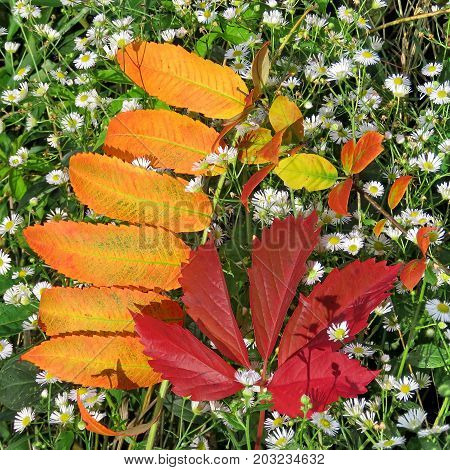 Red leaves and white flowers in forest of Thornhill Canada September 3 2017