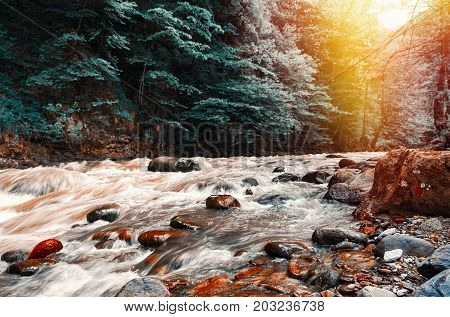 Closeup view on forest creek in sunset