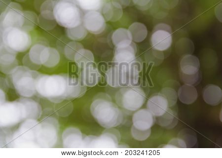 Green and white circle bokeh burry background