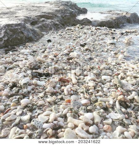 son conchas de mar en la isla cozumel mexico