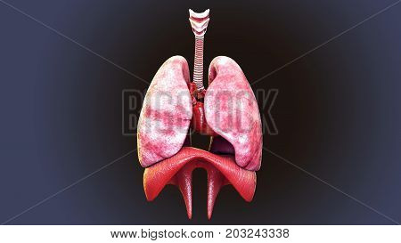 3d illustration of human body respiratory system