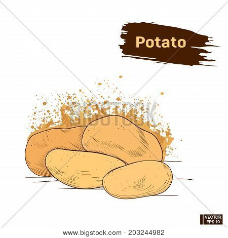 Potato, Colors Sketch Hand Drawing
