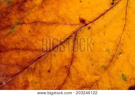 yellow autumn leaf background zoom macro photo