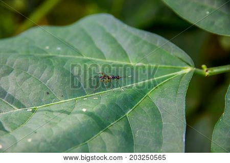 Insect on green leaf beautiful texture background