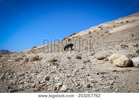 Desert countryside landscape of Jordan, Middle East