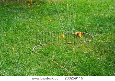 Lawn sprinkler spaying water over green grass with autumn yellow leaves. Irrigation system