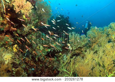 Scuba Diving in Dampier Strait Raja Ampat Indonesia