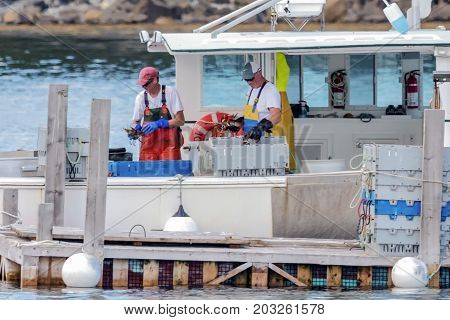 Bar Harbor Maine USA - 28 July 2017: Two lobstermen are sorting out their catch for the day placing lobsters in creats by weight and size before they bring the lobsters to the pier to be sold.