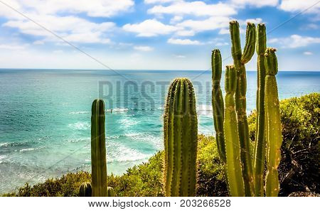 SAN DIEGO - JULY 16, 2016 - A view of the Pacific Ocean, nearby some cacti in The Meditation Garden on July 16, 2016, in San Diego. This meditation garden is home to many species of plants and fish.