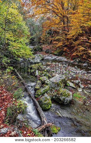 Autumn rocky landscape in the Rametului Gorges located in Apuseni Mountains TransylvaniaRomania.